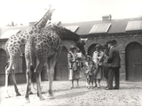 Giraffes and Visitors at Zsl London Zoo, from July 1926 Photographic Print by Frederick William Bond