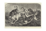 Bloodhounds on the Trail Giclee Print by George Bouverie Goddard