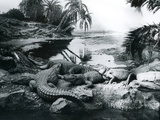 Alligators, in a Panorama Setting, at London Zoo, 1928 Photographic Print by Frederick William Bond