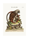 The Little Lion-Monkey, 1749-73 Giclee Print by George Edwards
