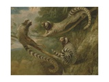 A Marmoset in Three Attitudes, 1793 Giclee Print by George Garrard