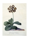 Glory of Chilton, C.1745 Giclee Print by Georg Dionysius Ehret