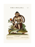 The Bush-Tailed Monkey, 1749-73 Giclee Print by George Edwards