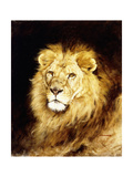 The Head of a Lion Giclee Print by Geza Vastagh
