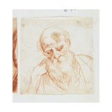 Head of a Bearded Man Looking Down Giclee Print by Giuseppe Cesari