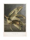 Mais, Ble De Turquie, from Fleurs Dessinees D'Apres Nature, C. 1800 Giclee Print by Gerard Van Spaendonck