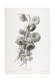 Anemone Double, from Fleurs Dessinees D'Apres Nature, C. 1800 Giclee Print by Gerard Van Spaendonck