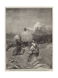 The Barleyfield Giclee Print by George Elgar Hicks