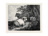 Sheep, in the International Exhibition 1862 Giclee Print by George Morland