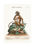 The St. Jago Monkey, 1749-73 Giclee Print by George Edwards