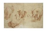 Four Studies of an Elephant Giclée-tryk af Giulio Romano
