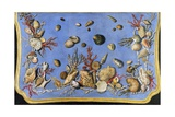 Preparatory Painting for Floor Console Decorated with Shells and Corals, 1760 Giclee Print by Giuseppe Zocchi