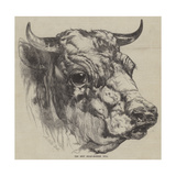 The Best Short-Horned Bull Giclee Print by Harrison William Weir