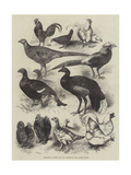 Exhibition of Game Birds and Bantams at the Crystal Palace Impression giclée par Harrison William Weir
