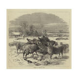 Sheep in Winter Time Giclee Print by Harrison William Weir