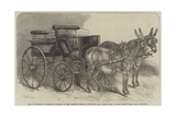Pair of Donkeys in Harness Exhibited by Miss Burdett Coutts at the Mule and Donkey Show in the Agri Giclee Print by Harden Sidney Melville