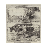 Prize Cattle from the Royal Agricultural Society's Show at Warwick Giclee Print by Harrison William Weir