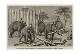Elephants Demolishing a Stockade, Wontho, Upper Burma Giclee Print by Harry Hamilton Johnston