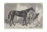 Brown Duchess, Winner of the Oaks Giclee Print by Harry Hall