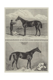 Racehorse Giclee Print by Harry Hall