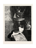 A Longing Look, 1890 Giclee Print by Henriette Ronner-Knip
