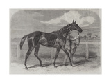 Caller Ou, the Winner of the St Leger Giclee Print by Harry Hall