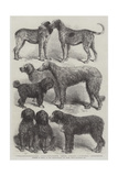Winners of Prizes at the International Dog Show, Paris Giclee Print by Harrison William Weir