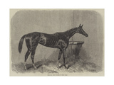 Regalia, the Winner of the Oaks Giclee Print by Harry Hall