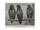 Three Watchers Giclee Print by Henry Stacey Marks