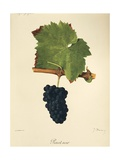 Pinot Noir Grape Giclee Print by J. Troncy
