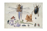 A Cockchafer, Beetle, Woodlice and Other Insects, with a Sprig of Auricula, Early 1650S Giclee Print by Jan van Kessel