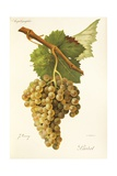 Lardot Grape Giclee Print by J. Troncy