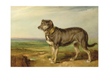 Portrait of 'Vic', a Spanish Bloodhound, C.1818-20 Giclee Print by James Ward
