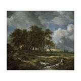 Landscape Near Muiderberg, Early 1650s Giclee Print by Jacob van Ruisdael