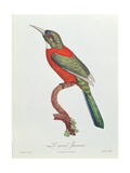 Great Jacamar, Engraved by Gromillier Giclee Print by Jacques Barraband