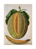Melon, C.1568 Giclee Print by Jacques Le Moyne