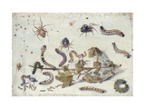Various Spiders and Caterpillars, with a Sprig of Gooseberry, Early 1650S Giclee Print by Jan van Kessel