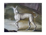 Dog Giclee Print by Jacopo Guarana