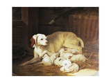 Bitch Nursing Puppies Giclee Print by Jean-Baptiste Oudry