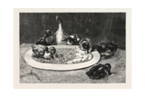 Ducks and Green Peas, 1876 Picture Giclee Print by John Charles Dollman