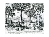 Tropical Fruit Trees, 1596 Giclee Print by Johannes Baptista van Frueauf the Younger