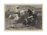 The End of the Zulu War, Hurdle Race by Basutos at the Camp in the Upoko Valley Giclee Print by John Charles Dollman