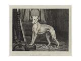 Vanity Giclee Print by John Charlton