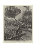 Tigers on the Line, an Incident in a Journey on the East Indian Railway Giclee Print by John Charlton