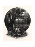A Hummock, Florida Giclee Print by John Douglas Woodward