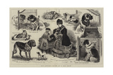 Our Artist's Notes at a Dog Show Giclee Print by John Charles Dollman
