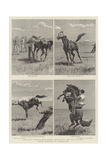 Horse Ranching in Queensland Reproduction procédé giclée par John Charles Dollman