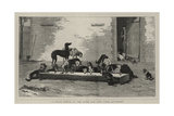 A Table D'Hote at the Home for Lost Dogs, Battersea Reproduction procédé giclée par John Charles Dollman