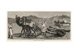 A Camel's Funeral Procession Reproduction procédé giclée par John Charles Dollman