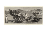 A Camel's Funeral Procession Giclee Print by John Charles Dollman